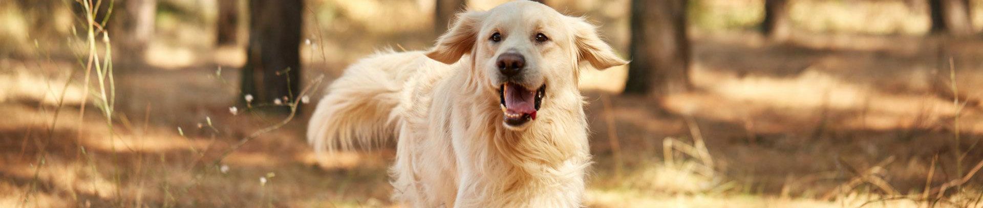 Dog Price List in India 2019 - Find Your Budget-Friendly Dog